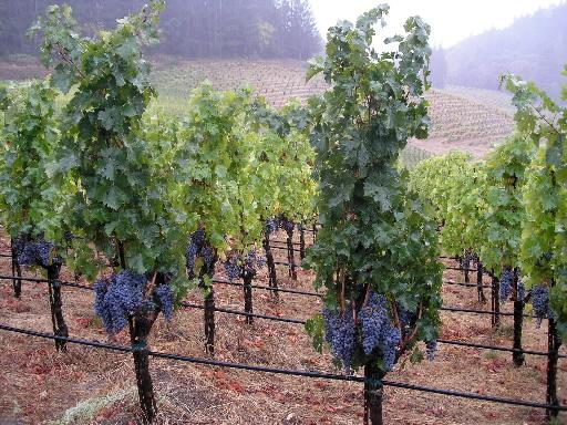 Dominują gospodarstwa rodzinne, oferujące wina na rynek lokalny.
