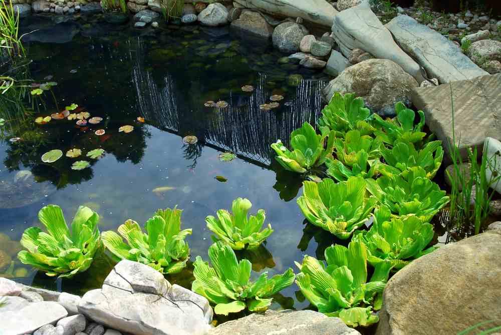 Oczko wodne na wiosn woda w ogrodzie ogr d for Tuinvijvers aanleggen