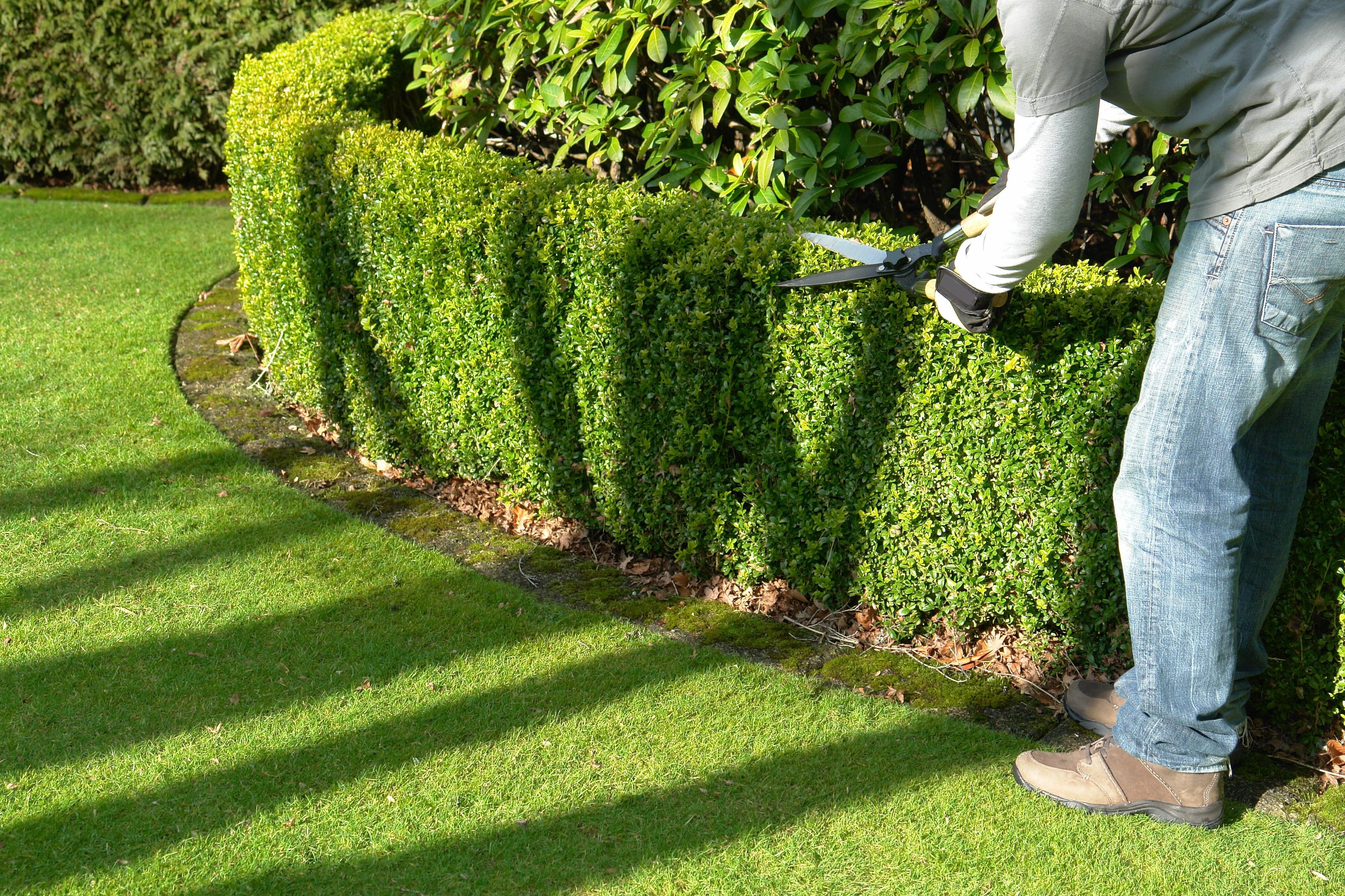 Ywop ot formowany najlepsze ro liny drzewa i krzewy for Cherche paysagiste