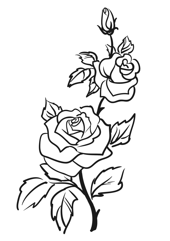 Line Art Resolution : Darmowy szablon malarski do wydruku róża szablony