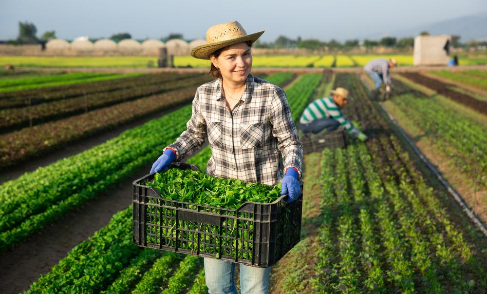 Ubezpieczenia dla rolników z dopłatami z budżetu państwa