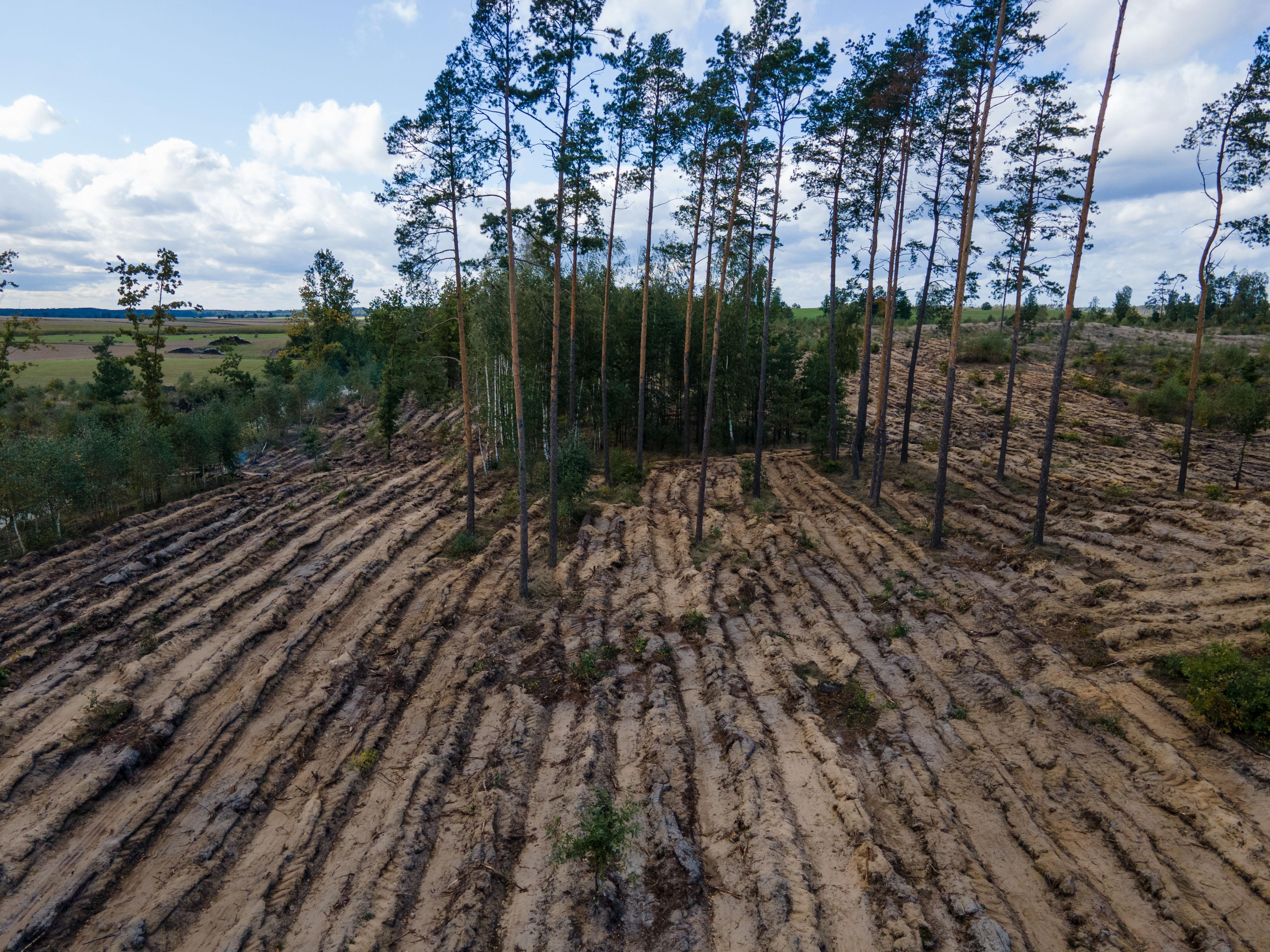 Volkswagen... sadzi lasy! Nie, to nie żart, a nowa akcja marki