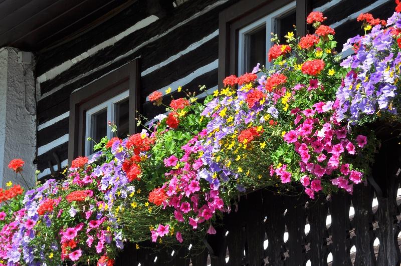 Kwiaty Na Stanowisko Półcieniste Kwiaty Doniczkowe Ogród