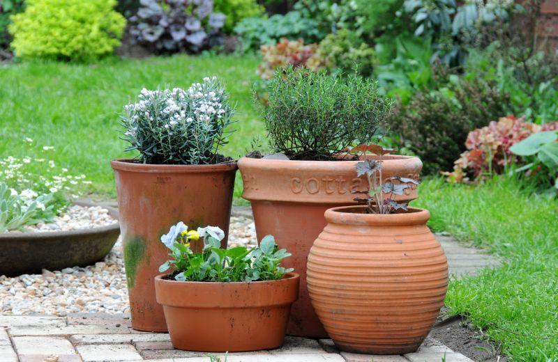 10 Zasad Sadzenia Cebul Kwiatowych W Donicach Kwiaty