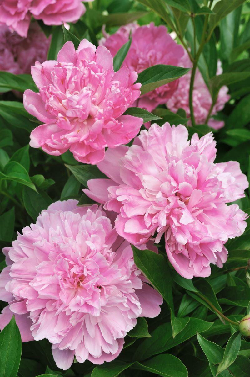 Jakie Kwiaty Są Odpowiednie Według Feng Shui