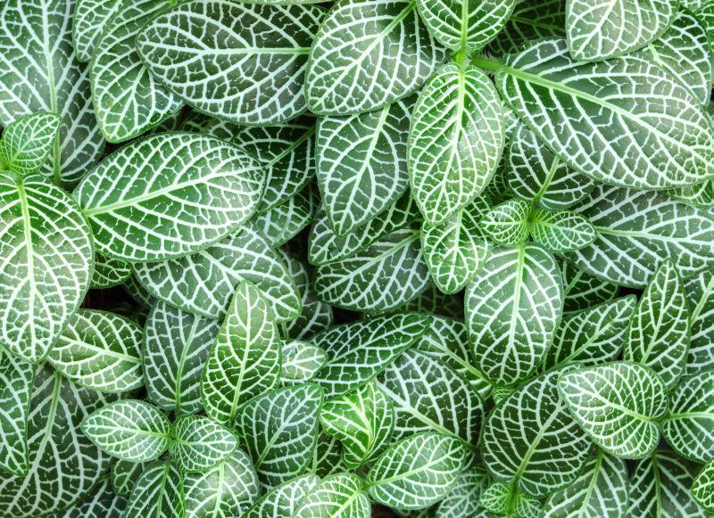 Rośliny Doniczkowe Które Potrzebują Niewielkiej Ilości